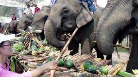 Chiang Rae, Tailandia - 2019-03-13 - festival del banquete del elefante - el elefante ase la pila de caña de azúcar metrajes