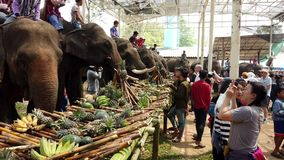 Chiang Rae, Tailandia - 2019-03-13 - festival del banquete del elefante - fila de elefantes en la tabla metrajes