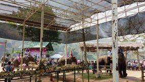 Chiang Rae, Tailandia - 2019-03-13 - festival del banquete del elefante - los elefantes entran en la tabla del banquete almacen de video