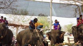 Chiang Rae, Tailandia - 2019-03-13 - festival del banquete del elefante - muchacha en subidas amarillas en la cabeza del elefante metrajes