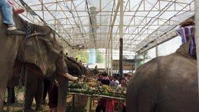 Chiang Rae, Tailandia - 2019-03-13 - festival del banquete del elefante - vista lateral de la fila de la consumición de los elefa almacen de video