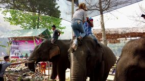 Chiang Rae, Thailand - 2019-03-13 - elephant feast festival - girl in stripes climbs on elephant head.  stock video footage