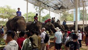 Chiang Rae, Thailand - 2019-03-13 - elephant feast festival - view of people in line feeding elephants.  stock footage
