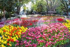 CHIANG RAI, TAILANDIA - 29 DE ENERO: Campo del tulipán en la gran inauguración 12mo Chiang Rai Flower Festival Thailand Foto de archivo libre de regalías