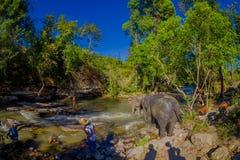 CHIANG RAI, TAILANDIA - 1 DE FEBRERO DE 2018: Vista al aire libre del grupo de jugar feliz de los elefantes en el agua en el elef Foto de archivo