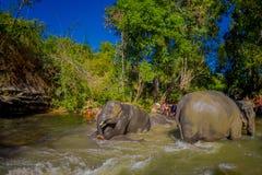 CHIANG RAI, TAILANDIA - 1 DE FEBRERO DE 2018: Vista al aire libre hermosa del grupo de jugar feliz de los elefantes en el agua en Fotos de archivo