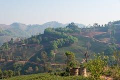 Chiang Rai, Tailandia - 28 febbraio 2015: Vista della piantagione di tè Lan fotografie stock libere da diritti