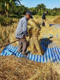 CHIANG RAI, TAILANDIA - 23 NOVEMBRE: Th tailandese non identificato dell'agricoltore Fotografie Stock Libere da Diritti