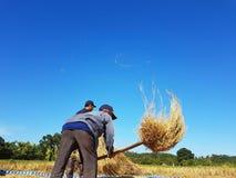 CHIANG RAI, TAILANDIA - 23 NOVEMBRE: Th tailandese non identificato dell'agricoltore Fotografia Stock