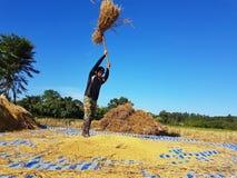 CHIANG RAI, TAILANDIA - 23 NOVEMBRE: Th tailandese non identificato dell'agricoltore Immagine Stock Libera da Diritti