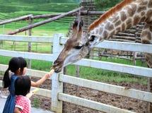 Chiang Rai Thailand, Aug28, 2016: Två flickor som håller ögonen på och matar giraffet under en tur till en stadszoo på Singhs, pa arkivfoton