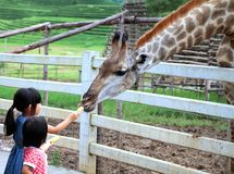 Chiang Rai, Thailand, Aug28, 2016: Zwei Mädchen, die Giraffe während einer Reise zu einem Stadtzoo an Singhs Park aufpassen und e Stockfotos