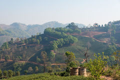Chiang Rai, Thailand. - Feb 28 2015: View of Tea Plantation. Lan. Dscape of tea plantation at Doi Mae Salong, Chiang Rai, Thailand royalty free stock photos