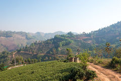 Chiang Rai, Thailand. - Feb 28 2015: View of Tea Plantation. Lan. Dscape of tea plantation at Doi Mae Salong, Chiang Rai, Thailand stock photo