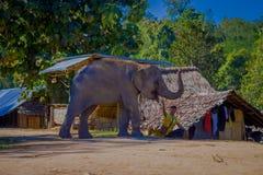 CHIANG RAI THAILAND - FEBRUARI 01, 2018: Härlig utomhus- sikt av den oidentifierade mannen som spelar med en elefant i en lera Arkivfoto