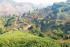 Chiang Rai, Thailand - 28 februari 2015: Mening van Theeaanplanting LAN Stock Afbeeldingen