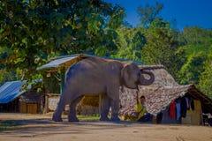 CHIANG RAI THAILAND - FEBRUARI 01, 2018: Ursnygg utomhus- sikt av den oidentifierade mannen som spelar med en elefant i en lera Arkivfoto