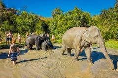 CHIANG RAI THAILAND - FEBRUARI 01, 2018: Utomhus- sikt av oidentifierade turister nästan enorma elefanter i djungel Arkivbild