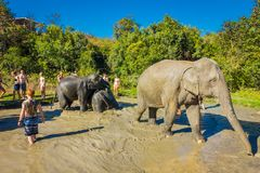 Free CHIANG RAI, THAILAND - FEBRUARY 01, 2018: Outdoor View Of Unidentified Tourists Close To A Huge Elephants In Jungle Stock Photography - 111581492