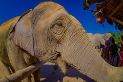 CHIANG RAI, THAILAND - FEBRUARY 01, 2018: Close up of an amazing view of huge elephant close to unidentified people Royalty Free Stock Photo