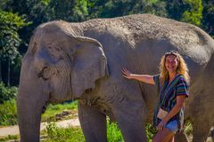 CHIANG RAI, THAILAND - FEBRUARY 01, 2018: Unidentified blonde woman pampering a huge pachyderm elephant in a Jungle Royalty Free Stock Photos