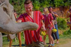 CHIANG RAI, THAILAND - FEBRUARY 01, 2018: Unidentified happy man feeding with a bunch of little bananas a huge pachyderm Royalty Free Stock Image