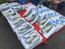 CHIANG RAI, THAILAND - OCTOBER 11 : Steamed thai mackerel fish (. Pla tu) for sale in plastic wrapped in Thai market on October 11, 2016 in Chiang rai, Thailand Stock Photo