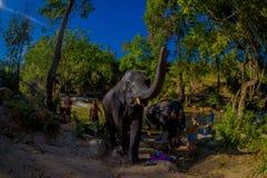 CHIANG RAJA TAJLANDIA, LUTY, - 01, 2018: Grupa turyści blisko do ogromni słonie przy słoń dżungli sanktuarium Obraz Stock