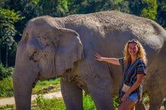 CHIANG RAJA TAJLANDIA, LUTY, - 01, 2018: Niezidentyfikowana blondynki kobieta pampering ogromnego pachyderm słonia w dżungli Zdjęcia Royalty Free