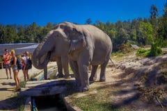CHIANG RAJA TAJLANDIA, LUTY, - 01, 2018: Niezidentyfikowani ludzie bierze obrazki blisko do ogromnego słonia w dżungli Zdjęcie Stock