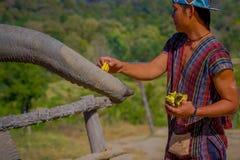 CHIANG RAJA TAJLANDIA, LUTY, - 01, 2018: Niezidentyfikowany mężczyzna karmienie z wiązką mali banany ogromny pachyderm fotografia royalty free