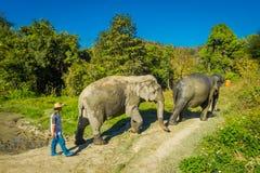 CHIANG RAJA TAJLANDIA, LUTY, - 01, 2018: Niezidentyfikowany mężczyzna odprowadzenie blisko do ogromni słonie w dżungli sanktuariu Zdjęcia Stock