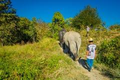 CHIANG RAJA TAJLANDIA, LUTY, - 01, 2018: Niezidentyfikowany mężczyzna odprowadzenie blisko do ogromni słonie w dżungli sanktuariu Zdjęcie Royalty Free