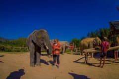 CHIANG RAJA TAJLANDIA, LUTY, - 01, 2018: Piękny plenerowy widok niezidentyfikowani ludzie blisko do ogromnego słonia wewnątrz Zdjęcie Stock