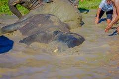 CHIANG RAJA TAJLANDIA, LUTY, - 01, 2018: Plenerowy widok niezidentyfikowana rodzina blisko do ogromni słonie w dżungli Obrazy Stock