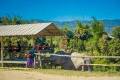CHIANG RAJA TAJLANDIA, LUTY, - 01, 2018: Plenerowy widok niezidentyfikowani ludzie patrzeje dwa ogromnego słonia wewnątrz pod bud Zdjęcie Stock
