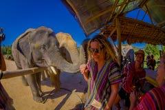 CHIANG RAJA TAJLANDIA, LUTY, - 01, 2018: Zadziwiający plenerowy widok niezidentyfikowani ludzie blisko do ogromni słonie, mieć Obrazy Royalty Free