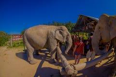 CHIANG RAJA TAJLANDIA, LUTY, - 01, 2018: Zadziwiający plenerowy widok niezidentyfikowani ludzie blisko do ogromni słonie, mieć Obraz Stock