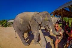 CHIANG RAJA TAJLANDIA, LUTY, - 01, 2018: Zadziwiający plenerowy widok niezidentyfikowani ludzie blisko do ogromni słonie, mieć Fotografia Royalty Free