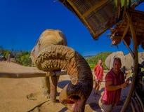 CHIANG RAJA TAJLANDIA, LUTY, - 01, 2018: Zadziwiający widok niezidentyfikowani ludzie blisko do ogromni słonie, mieć wielkiego Zdjęcie Stock