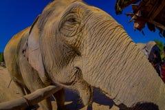 CHIANG RAJA TAJLANDIA, LUTY, - 01, 2018: Zamyka up zadziwiający widok ogromny słoń blisko do niezidentyfikowanych ludzi Obrazy Royalty Free