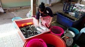 Chiang Saen, Tailândia - 2019-03-10 - mulher usa o prato para mover o peixe-gato vivo entre escaninhos vídeos de arquivo