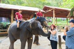 Chiangmai,泰国- 11月16 :mahouts乘坐大象并且招呼2014年11月16日的外国人在Sa Mae大象阵营,池氏 免版税图库摄影