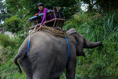 Chiangmai, Таиланд - 31-ое марта 2016: Остатки Mahout на слоне Стоковые Фото