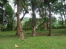 Chiangmai Arkivfoto