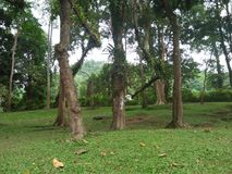 Chiangmai Photo stock