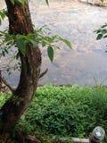 Chiangmai Zdjęcie Royalty Free