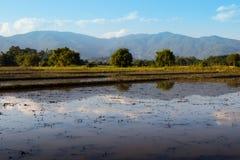 Chiangmai Стоковое фото RF
