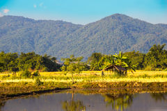 Chiangmai Стоковые Фото