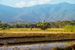 Chiangmai Стоковые Изображения